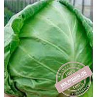Clause Легат F1 (Legat F1) семена белокочанной, ранней капусты Clause, оригинальная упаковка (2500 семян)