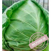 Clause Легат F1 (Legat F1) семена белокочанной, ранней капусты Clause, оригинальная упаковка (1000 семян)