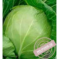 Clause Оракл F1 (Orakl F1) семена белокочанной, ранней капусты Clause, оригинальная упаковка (10000 семян)
