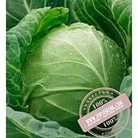 Clause Годвари F1 (Godvari F1) семена белокочанной, ранней капусты Clause, оригинальная упаковка (1000 семян)