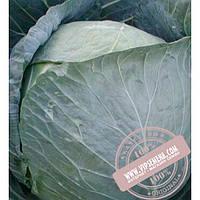 Clause Браво F1 (Bravo F1) семена белокочанной, средней капусты Clause, оригинальная упаковка (2500 семян)