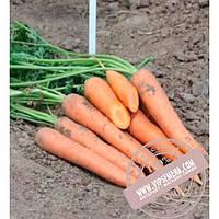 Nunhems Колтан F1 (Coltan F1) Ǿ 1.6-1.8 семена моркови тип Нантес Nunhems, оригинальная упаковка (100000-семян)