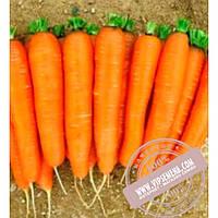 Nunhems Романс F1 (Romans F1) Ǿ 1.8-2.0 семена моркови тип Нантес Nunhems, оригинальная упаковка (100000-семян)