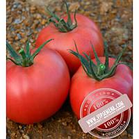 Nunhems Грифон F1 (Grifon F1) семена розового индетерминантного томата Nunhems, оригинальная упаковка (500-семян)