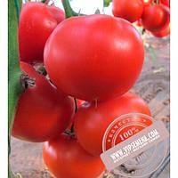 Nunhems Диаграмма (Diagramma) семена индетерминантного томата Nunhems, оригинальная упаковка (500-семян)
