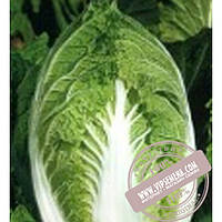 Sakata Юки F1 (Yuki F1) семена капусты пекинской Sakata, оригинальная упаковка (1000 семян)