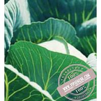 Syngenta Куизор F1 (Quisor F1) семена капусты белокочанной среднеспелой Syngenta, оригинальная упаковка (2500 семян)
