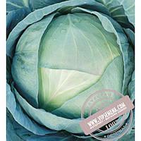 Агрессор F1 (Agressor F1) семена капусты белокочанной среднепоздней (115-120 дней) Syngenta