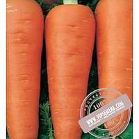 Тирас Афалон F1 (Afalon F1) семена моркови Moravoseed, оригинальная упаковка (50000 семян)