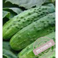 Тирас Алтай F1 (Altai F1) семена огурца плёлоопыляемого Moravoseed, оригинальная упаковка (50 грамм)
