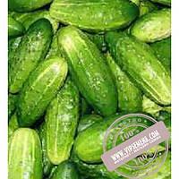 Тирас VAL 54 F1 (VAL 54 F1) семена огурца плёлоопыляемого Moravoseed, оригинальная упаковка (50 грамм)