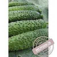 Тирас Алице F1 (Alice F1) семена огурца плёлоопыляемого Moravoseed, оригинальная упаковка (50 грамм)