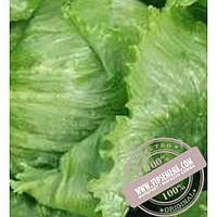 Тирас Этти (Etti) семена салата Айсберг Moravoseed, оригинальная упаковка (10000 семян)