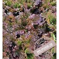 Тирас Росела (Rosela) семена Батавия салата Moravoseed, оригинальная упаковка (10000 семян)