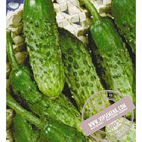Элитный Ряд Родничёк F1 (Rodnichek F1)  семена огурца пчёлоопыляемого Элитный Ряд, оригинальная упаковка (250 грамм)