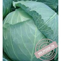 Тирас Гелиос F1 (Gelios F1) семена капусты белокочанной Moravoseed, оригинальная упаковка (2500 семян)