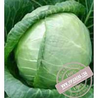 Тирас Киклоп F1 (Kiklop F1) семена капусты белокочанной Moravoseed, оригинальная упаковка (2500 семян)