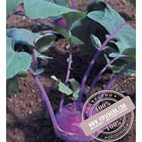 Тирас Балот F1 (Balot F1), семена капусты кольраби Moravoseed оригинальная упаковка (2500 семян) раннеспелая