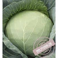Тирас Таргет F1 (Target F1) семена капусты белокочанной Moravoseed, оригинальная упаковка (2500 семян)