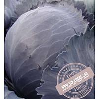 Тирас Квит F1 (Kvit F1) семена капусты краснокочанной Moravoseed, оригинальная упаковка (2500 семян) позднеспелая