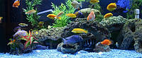 Tetra-корм для аквариумных рыб