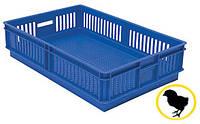 Ящик для перевезення добових курчат на 1 відділення, фото 1