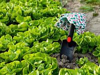 Биопрепараты в органическом земледелии: важность применения и результат