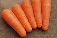 Семена морковь Шантанэ Рэд