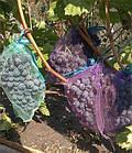 Сетка-мешок, защитная сетка для винограда 22х30, (2 кг.) Купить, фото 2
