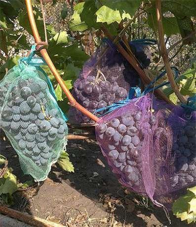Защитные мешочки для гроздей винограда 28*40см, (5 кг.) Купить