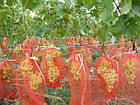 Защитные мешочки для гроздей винограда 28*40см, (5 кг.) Купить, фото 3