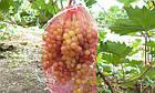 Защитные мешочки для гроздей винограда 28*40см, (5 кг.) Купить, фото 4