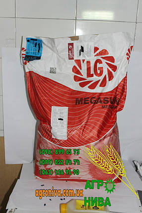Семена подсолнечника Limagrain LG Мегасан , фото 2