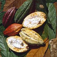 Масло какао рафинированное