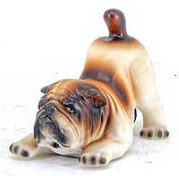 Сторожевая собака для охраны объектов (4715.1)