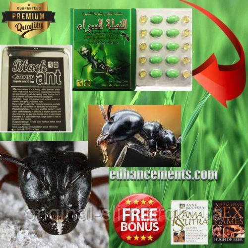 medicine for a potentiality of africa black ant king the african