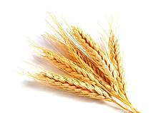 Оборудование для анализа качества зерна