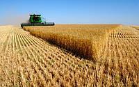 Ранние зерновые: самая высокая средняя урожайность