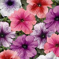 Петунія грандіфлора Браво F1 (колір на вибір)1000 шт., фото 1