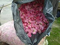 Урожай розы