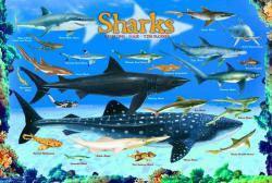 Красочные пазлы 'Акулы, 100 элементов