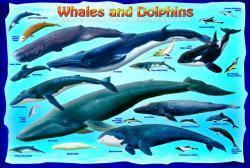 Красочные пазлы 'Киты и дельфины, 100 элементов