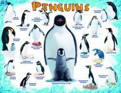 Пазлы Eurographics Пингвины 100 элементов