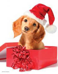 Красочные пазлы 'Праздничный щенок, 100 элементов