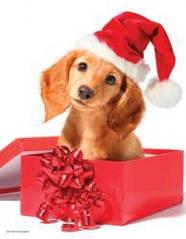 Пазлы Eurographics Праздничный щенок 100 элементов
