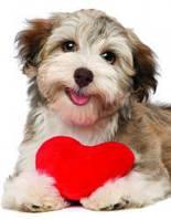 Красочные пазлы 'Песик с сердцем, 100 элементов