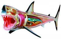 Анатомическая модель  Большая белая акула, 4D Master 26111