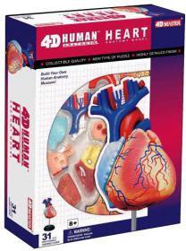Анатомическая модель человека  'Сердце человека', 4D Master 26052 - Интернет-магазин Купи: термомозаика, пазлы, конструктор, технику в Киеве