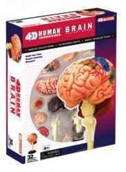Анатомическая модель человека  'Мозг человека', 4D Master 26056 - Интернет-магазин Купи: термомозаика, пазлы, конструктор, технику в Киеве