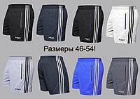Мужские шорты спортивные много цветов